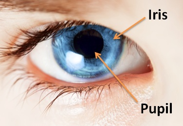 eye-diagram-for-iris-and-pupil